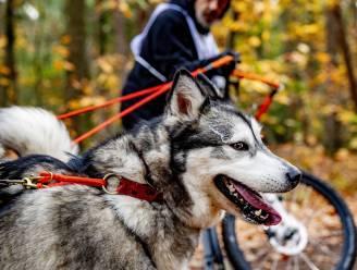 Politie waarschuwt hondenbaasjes voor giftig lokaas