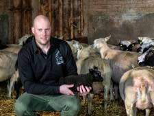 Lammetjestijd is mooi én slopend tegelijk voor schapenboer Nicky uit Bemmel
