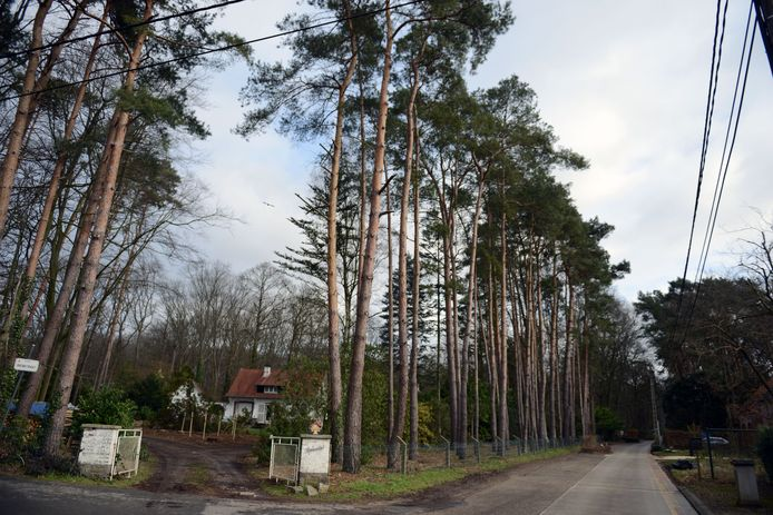 De Heikantberg is populair in Rotselaar.