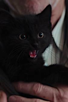 Wint katje Frummel dit jaar de Gouden Loeki?