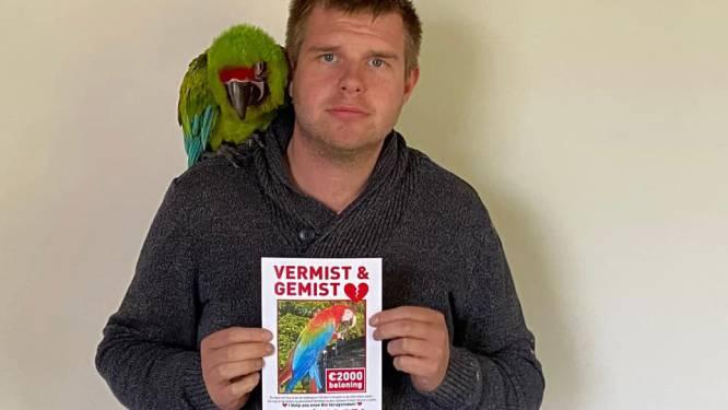 Beloning voor gouden tip naar papegaai Rio opgetrokken naar 2.000 euro