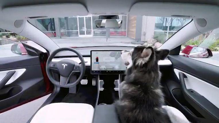 De hond kan veilig achterblijven in de Tesla.a