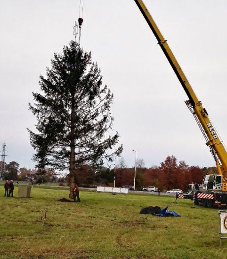 Sterren Stralen is naarstig op zoek naar een kerstboom XXL