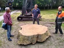 Eén van de mooiste bomen van Tilburg reïncarneert als schijf