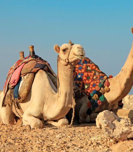 Vrouw valt van kameel en daagt Tripadvisor voor rechter