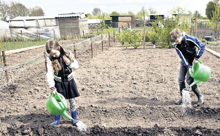 Laura en Jens verzorgen de plantjes in hun volkstuin. Beeld Rob Huibers