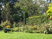 Lya heeft een tuin van 1700 vierkante meter: 'Tuinieren is geen werk, maar een genoegen'