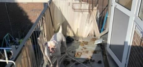 Bulldog Icey stond 3 jaar in de poep: 'Politie en woningbouw deden niets'