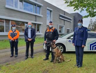"""Murphy en Jeroen versterken Sint-Niklase politie: """"Maar we worden wel niet graag geaaid tijdens onze dienst"""""""