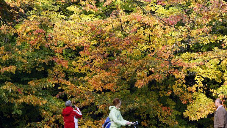 Herfst in het Oosterpark. Beeld anp
