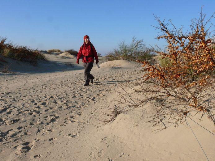 De duinen in De Panne