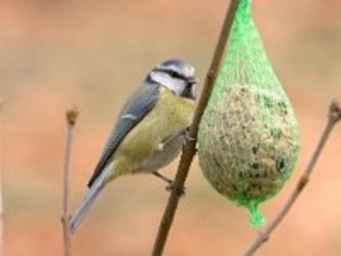 Vogelvriendelijk tuinieren.