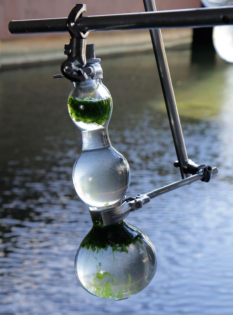 'Liquid Properties', een project van Marjolijn Dijkman en Toril Johannessen. Beeld RV Toril Johannessen