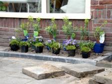 Tegel eruit, plantje erin: inwoners van Steenbergen kunnen een gratis plant krijgen