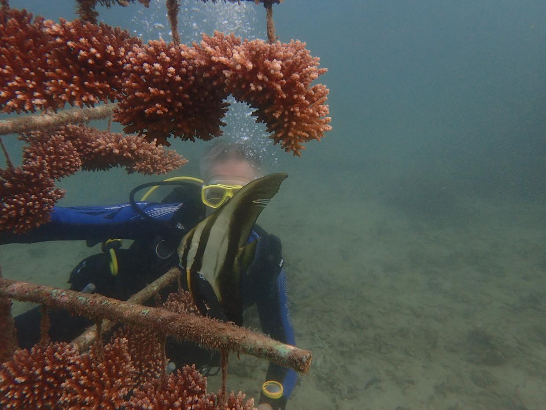 Een duiker inspecteert de groei van koraal aan een boomconstructie onderwater bij Mkwiro, een eiland vlak boven Tanzania.