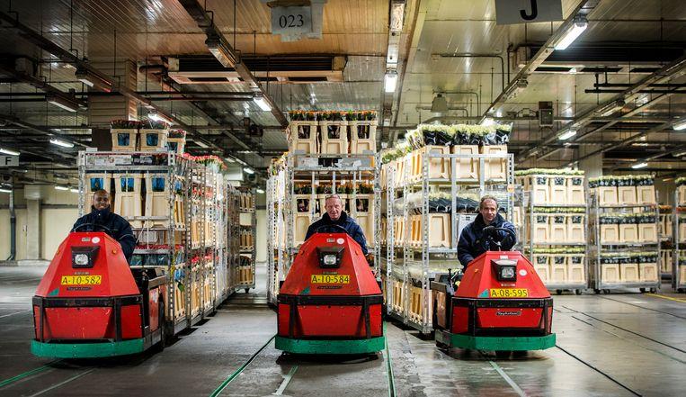 Bloemen voor de handel worden verwerkt bij FloraHolland in Aalsmeer. Beeld ANP / Remko de Waal