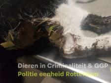 Kat keert na uren terug bij baasje: dier zit onder de lijm en op zijn lijf is afbeelding van pistool geplakt