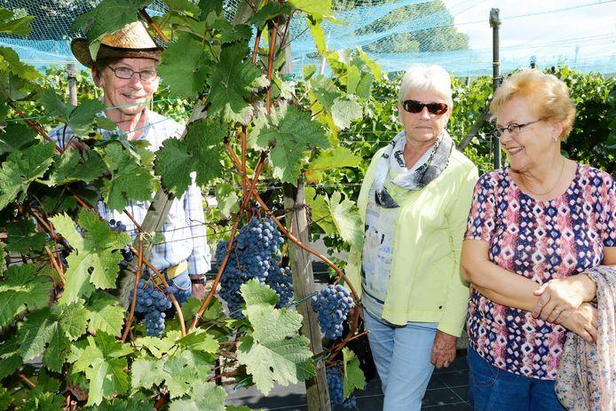 Eens per jaar nodigt Bikker mensen uit te komen kijken in zijn bescheiden wijngaard.