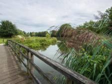 Dit vergeten park in Zutphen moet weer een oase van groen worden, maar hoe?