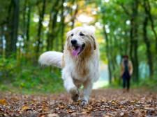 Beuningse start initiatief voor hondenspeelplek in het dorp: 'Hoop op mooi plekje in het Heuvepark'