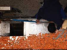 Katwijks bedrijf Duynie gaat testen: kans op stankoverlast
