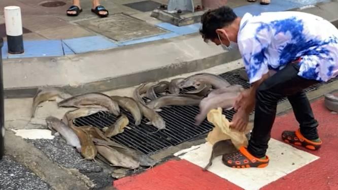 Het bizarre moment waarop vissen liggen te spartelen op drukke straat