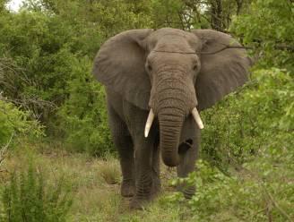 Genen olifanten sterker in bestrijding van kanker