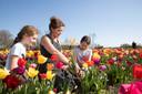 Eva en Noa krijgen uitleg van Hanneke over het trekken van de tulpen.