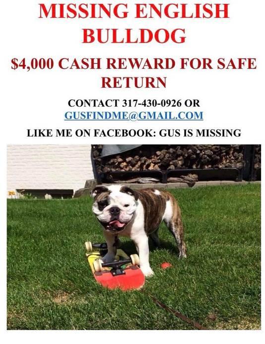 De familie Kiger wil Gus zo graag terughebben dat ze 4.000 dollar beloning uitloofden voor de gouden tip