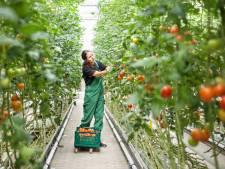 Gemert-Bakel: proef met complex arbeidsmigranten