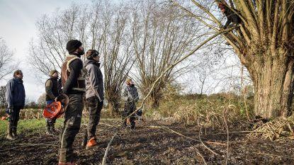 Houtzoekers knotten gratis jouw bomen