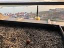 Het ei in de bak bovenop de Stevenstoren.