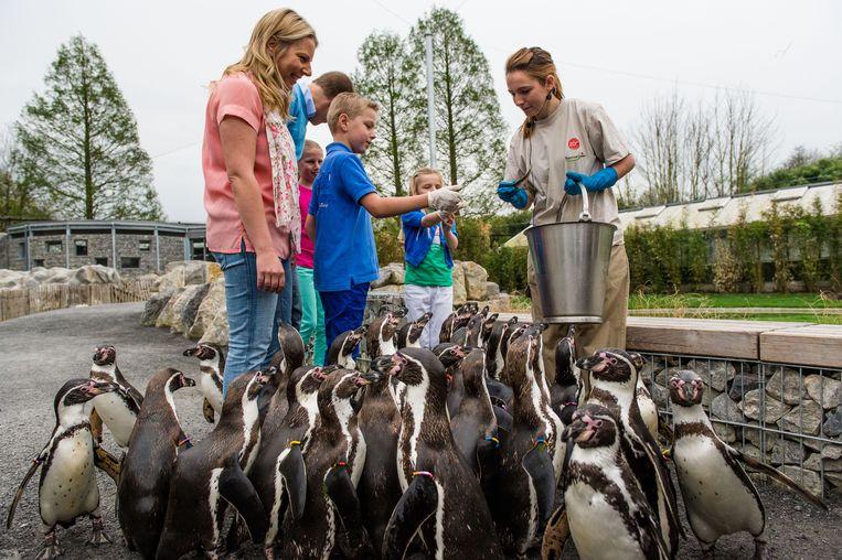 De vogels verblijven in dezelfde volière als de pinguïns.