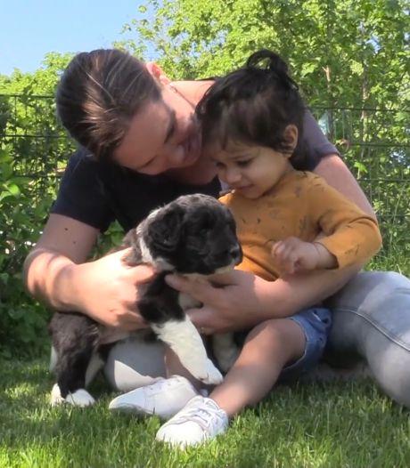 Bij dit dagverblijf kunnen kinderen knuffelen met puppy's