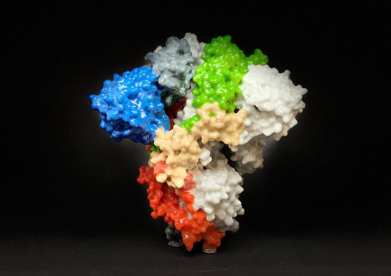 Model van een spike-eiwit van Sars-Cov-2. Dit is de sleutel waarmee het virus lichaamscellen van zijn gastheer kan binnendringen. Beeld EPA