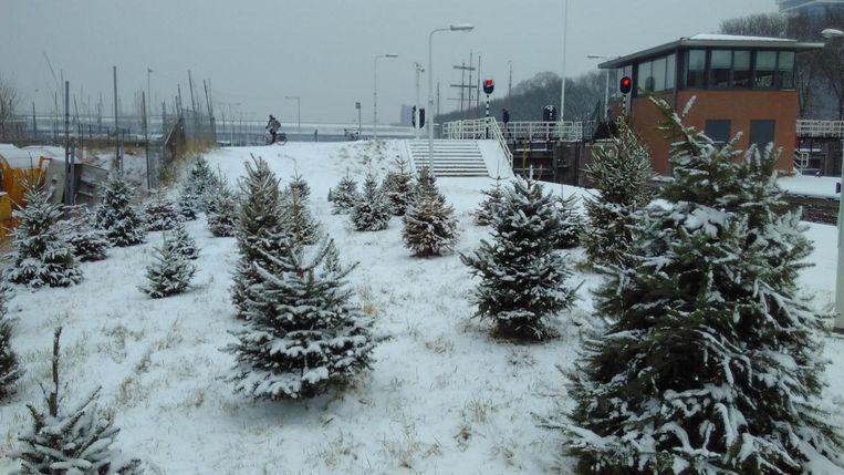 Het kerstbomenbos aan de Sixhavenweg. Beeld Voortuin van Noord