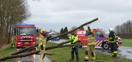 Stormschade in regio: vooral omgewaaide bomen en afgebroken takken