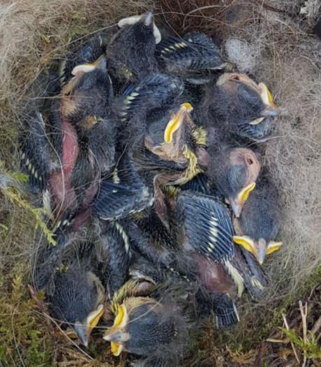 Vlooienmiddel huisdieren oorzaak van massale sterfte jonge mezen
