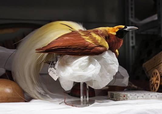 Een exotische vogel uit de Nusantara-collectie.