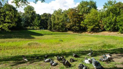 Vijver Stadspark staat al jaar droog