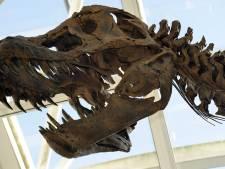 T-rex komt vrijwel zeker naar Naturalis in Leiden