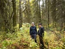 Te zien in Den Haag: Geen toerist te bekennen in het grootste bosgebied op aarde