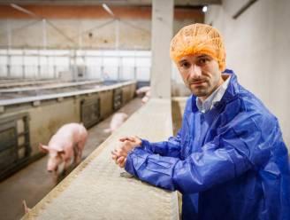Debra-Meat wil slachtcapaciteit verhogen van 1,5 naar 2,4 miljoen varkens per jaar, vier jaar na hetze rond undercoverbeelden
