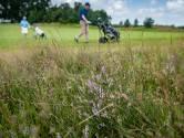 Niet maaien maar zaaien: natuur op de golfbaan