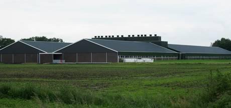 Provincie verwacht dat megastal Diessen gelegaliseerd kan worden