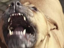Man gebeten door hond in Gorinchem