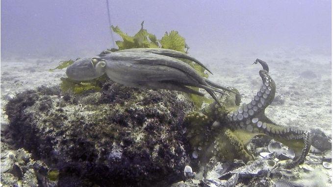 Neem een kijkje in Octlantis, een onderwaterstad die wetenschappers met verstomming slaat