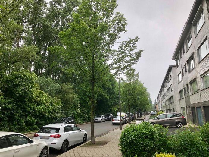 De Bergen op Zoomlaan: het bos links moet wijken voor de aanleg van een bypass voor de Oosterweelwerken. De snelweg komt zo tot op een meter of 30 van de huizen.