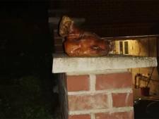 Une tête de porc retrouvée devant la maison d'une famille musulmane à Gembloux