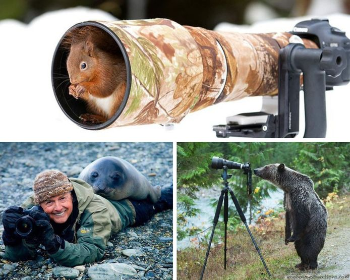 Quand les animaux sauvages interrompent les photographes animaliers.